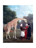 Nubian Giraffe Giclee Print by Jacques-Laurent Agasse