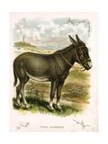 Illustration of Donkey Giclée-tryk
