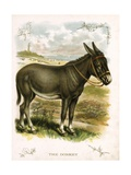 Illustration of Donkey Giclee Print