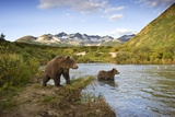 Two Year Old Grizzly Bears on Riverbank at Kinak Bay Reproduction photographique par Paul Souders