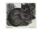 Sleepy Cat Giclee Print by Eileen Mayo