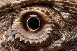 Eye of an Inland Bearded Dragon Fotografisk tryk af Paul Souders