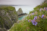 Wildflowers on Nukshak Island at Hallo Bay Photographic Print by Paul Souders