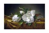 Magnolias on Gold Velvet Cloth Giclee Print by Martin Johnson Heade