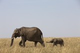 Elephants and Calf in Savanna Photographic Print by Paul Souders