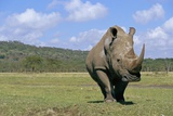 White Rhinoceros in Meadow Photographic Print by Paul Souders
