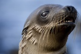 Galapagos Sea Lion Pup in Galapagos Islands Photographic Print by Paul Souders