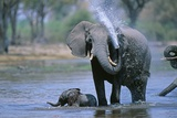 Elephant and Calf Cooling Off in River Fotografisk tryk af Paul Souders