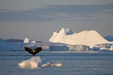 Humpback Whale in Disko Bay in Greenland Fotodruck von Paul Souders