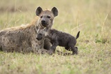 Spotted Hyena and Pup Photographic Print by Paul Souders