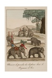 Taking Elephants in Burma Giclee Print