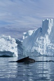 Humpback Whale in Disko Bay in Greenland Photographic Print by Paul Souders