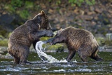 Brown Bears Sparring in Freshwater Bay Photographic Print by Paul Souders