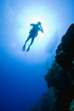 Scuba Diver Near Bloody Bay Wall Photographic Print by Paul Souders
