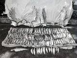 Moose Antlers and Fish on Display after Trip, Ca. 1948 Photographic Print