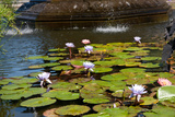 USA, New York, Central Park, Fountain and water lily Photographic Print by Samuel Magal