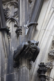 Germany, Cologne, Cologne Cathedral, Gargoyles Photographic Print by Samuel Magal