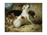 Foxhounds, Fox Gone to Earth: the Two Hounds Messmate and Coventry Giclee Print by Thomas Woodward