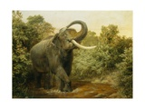 The Monster Tusker Giclee Print by Joseph Wolf