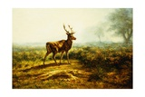The Stag, Effect of the Morning Giclee Print by Rosa Bonheur