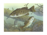 Smallmouth Bass Giclee Print
