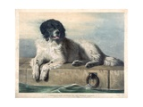 A Distinguished Member of the Humane Society Giclee Print by Edwin Henry Landseer
