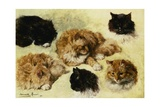 Studies of Cats Giclee Print by Henriette Ronner-Knip
