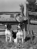 1940s Pair of English Springer Spaniels Sitting in Front of Post and Rail Fence Next to Shotgun Photographie