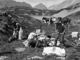 1920s-1930s Three Men Cowboys at Campsite Preparing Food Horses in Background Alberta Canada Photographic Print