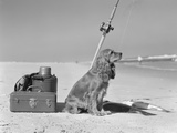 Cocker Spaniel Dog Standing Guard over Two Caught Fish and Fishing Equipment Photographie