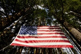 American Flag in Forest, Washington Photographic Print by Paul Souders