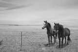 Horse in High Desert, Trujillo, New Mexico Photographic Print by Paul Souders