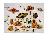 Still Life with Butterflies, Moths and Shells Giclee Print by Jan Van Kessel the Younger
