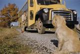 Faithful Dog Watching Boy Enter School Bus Photographie par William Gottlieb