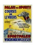Palais Des Sports - Courses De Levriers - Sportspalais Windhondenkoersen Dog Racing Poster Reproduction procédé giclée