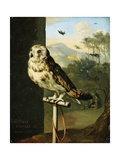An Owl on a Perch Giclee Print by Willem Van Mieris