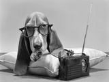 1960s Basset Hound Character Wearing Eye Glasses Lying on Pillow Listening to Transistor Radio Lámina fotográfica