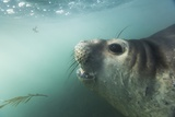 Elephant Seal in Livingstone Island, Antarctica Photographic Print by Paul Souders