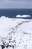 Chinstrap Penguins in Snow, Deception Island, Antarctica Photographie par Paul Souders