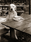 1930s Dog Mixed Breed Sitting Like Human Being at Outdoor Picnic Table Photographic Print