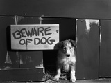 1960s Collie Dog Puppy Sitting in Door of Doghouse Beware of Dog Sign Photographic Print
