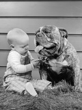 1950s-1960s Baby Sitting Playing with Bulldog Studio Photographic Print