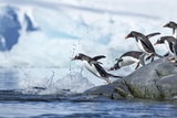 Gentoo Penguins on Petermann Island, Antarctica Photographic Print by Paul Souders