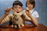 Annoying Brother Playing with His Sister's Pet Rabbit Photographic Print by William P. Gottlieb