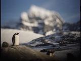 Gentoo Penguin on Goudier Island, Antarctica Photographic Print by Paul Souders
