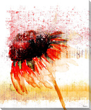 Flower 4 Stretched Canvas Print by Parvez Taj