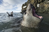 Elephant Seal at Livingstone Island, Antarctica Photographic Print by Paul Souders