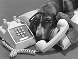 1960s Basset Hound Wearing Human Eye Glasses Lying on Pillow Talking on Telephone Push Button Photographic Print