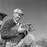 1950s Smiling Man Farmer Wearing Striped Overalls Holding Duroc Piglet on His Knees Photographic Print by B. Taylor