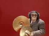1960s Chimpanzee Wearing Suit and Tie Playing Cymbals Fotoprint